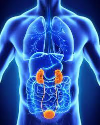 Novità nel carcinoma renale metastatico Meet the Expert – Corso RES-Videoconferenza 4 Maggio 2021